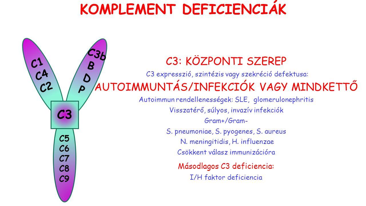 C5 C6 C7 C8 C9 C3 C3: KÖZPONTI SZEREP C3 expresszió, szintézis vagy szekréció defektusa: AUTOIMMUNTÁS/INFEKCIÓK VAGY MINDKETTŐ Autoimmun rendellenességek: SLE, glomerulonephritis Visszatérő, súlyos, invazív infekciók Gram+/Gram- S.