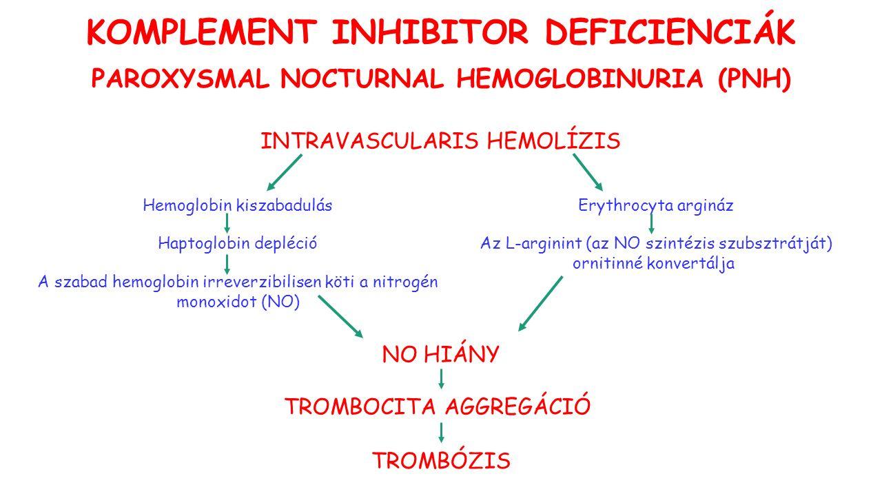 INTRAVASCULARIS HEMOLÍZIS Hemoglobin kiszabadulás Haptoglobin depléció A szabad hemoglobin irreverzibilisen köti a nitrogén monoxidot (NO) Erythrocyta argináz Az L-arginint (az NO szintézis szubsztrátját) ornitinné konvertálja NO HIÁNY TROMBÓZIS TROMBOCITA AGGREGÁCIÓ KOMPLEMENT INHIBITOR DEFICIENCIÁK PAROXYSMAL NOCTURNAL HEMOGLOBINURIA (PNH)