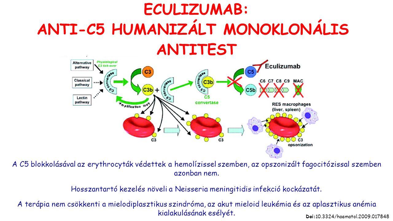 ECULIZUMAB: ANTI-C5 HUMANIZÁLT MONOKLONÁLIS ANTITEST A C5 blokkolásával az erythrocyták védettek a hemolízissel szemben, az opszonizált fagocitózissal szemben azonban nem.