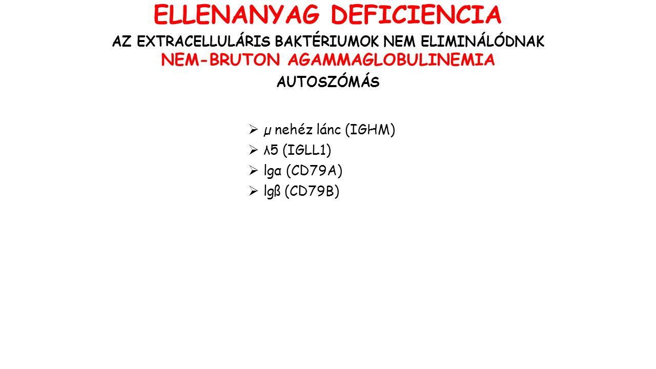  µ nehéz lánc (IGHM)  λ5 (IGLL1)  lgα (CD79A)  lgß (CD79B) ELLENANYAG DEFICIENCIA AZ EXTRACELLULÁRIS BAKTÉRIUMOK NEM ELIMINÁLÓDNAK NEM-BRUTON AGAMMAGLOBULINEMIA AUTOSZÓMÁS