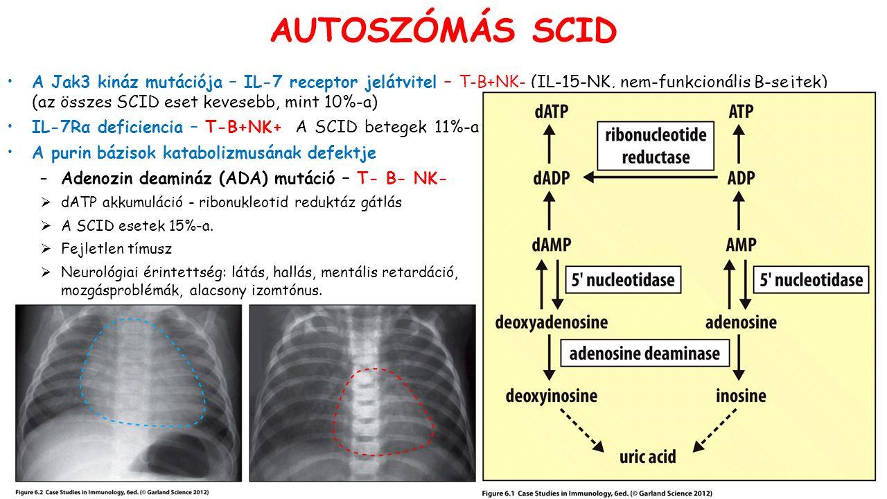 A Jak3 kináz mutációja – IL-7 receptor jelátvitel – T-B+NK- (IL-15-NK, nem-funkcionális B-sejtek) (az összes SCID eset kevesebb, mint 10%-a) IL-7Rα deficiencia – T-B+NK+ A SCID betegek 11%-a A purin bázisok katabolizmusának defektje –Adenozin deamináz (ADA) mutáció – T- B- NK-  dATP akkumuláció - ribonukleotid reduktáz gátlás  A SCID esetek 15%-a.