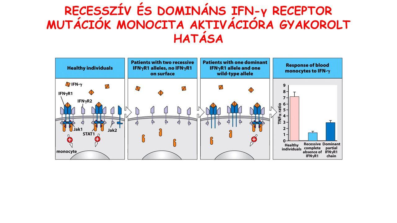FAGOCITA RENDSZER Perzisztens bakteriális fertőzések CD18 (CR3, CR4, LFA1) CGD NADPH oxidáz G6PD Mieloperoxidáz Vezikuláris fúzió KOMPLEMENT RENDSZER Főként poliszacharid burokkal rendelkező organizmusok és Neisseriae okozta fertőzések Immunkomplex lerakódás Szolubilis és membrán-kötött faktorok C1-C4 Alternatív útvonal C3 Terminális komponensek Komplement gátló faktorok A PRIMER IMMUNDEFICIENCIÁK TÍPUSAI TERMÉSZETES IMMUNITÁS