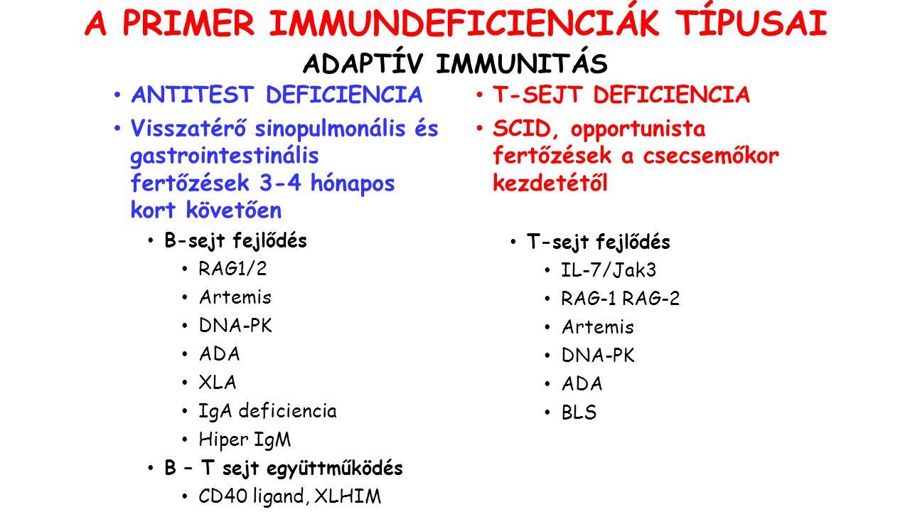 ANTITEST DEFICIENCIA Visszatérő sinopulmonális és gastrointestinális fertőzések 3-4 hónapos kort követően B-sejt fejlődés RAG1/2 Artemis DNA-PK ADA XLA IgA deficiencia Hiper IgM B – T sejt együttműködés CD40 ligand, XLHIM T-SEJT DEFICIENCIA SCID, opportunista fertőzések a csecsemőkor kezdetétől T-sejt fejlődés IL-7/Jak3 RAG-1 RAG-2 Artemis DNA-PK ADA BLS A PRIMER IMMUNDEFICIENCIÁK TÍPUSAI ADAPTÍV IMMUNITÁS