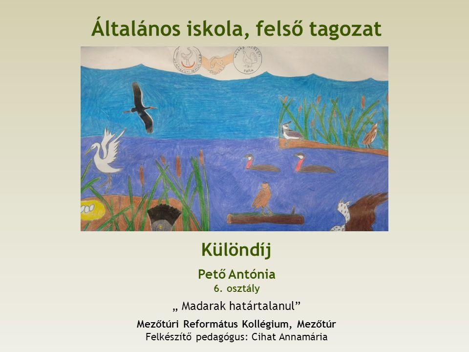 Általános iskola, felső tagozat Különdíj Pető Antónia 6.