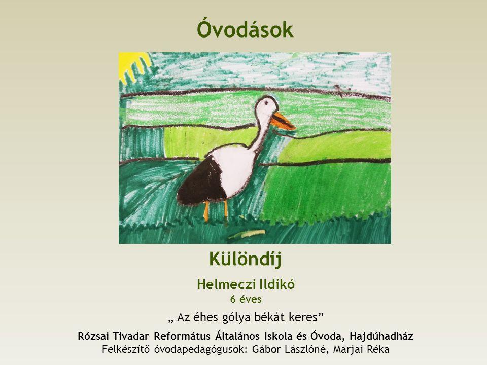 Általános iskola, felső tagozat Különdíj Sipos Miklós 13 éves, 7.