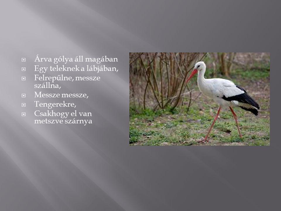 ÁÁrva gólya áll magában EEgy teleknek a lábjában, FFelrepűlne, messze szállna, MMessze messze, TTengerekre, CCsakhogy el van metszve szárn
