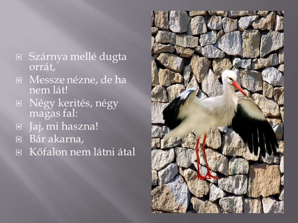 MMég az égre fölnézhetne, AArra sincsen semmi kedve: SSzabad gólyák szállnak ottan JJobb hazába; DDe hiába.