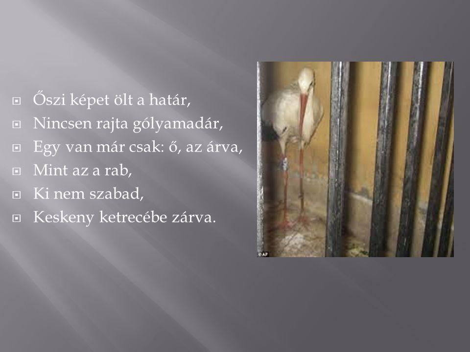 ŐŐszi képet ölt a határ, NNincsen rajta gólyamadár, EEgy van már csak: ő, az árva, MMint az a rab, KKi nem szabad, KKeskeny ketrecébe zárva.
