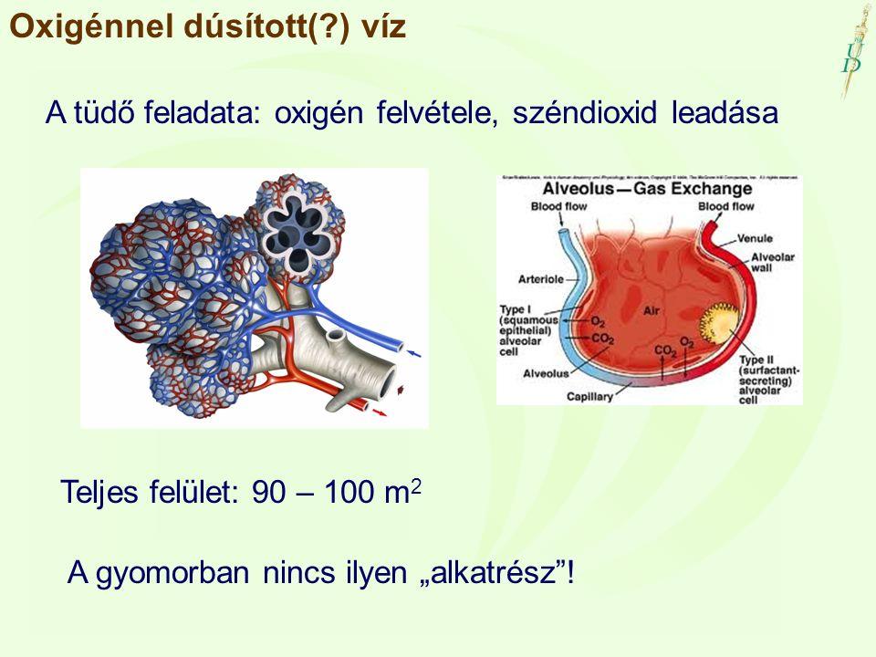"""Oxigénnel dúsított(?) víz A tüdő feladata: oxigén felvétele, széndioxid leadása Teljes felület: 90 – 100 m 2 A gyomorban nincs ilyen """"alkatrész""""!"""