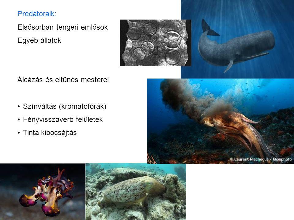 Predátoraik: Elsősorban tengeri emlősök Egyéb állatok Álcázás és eltűnés mesterei Színváltás (kromatofórák) Fényvisszaverő felületek Tinta kibocsájtás