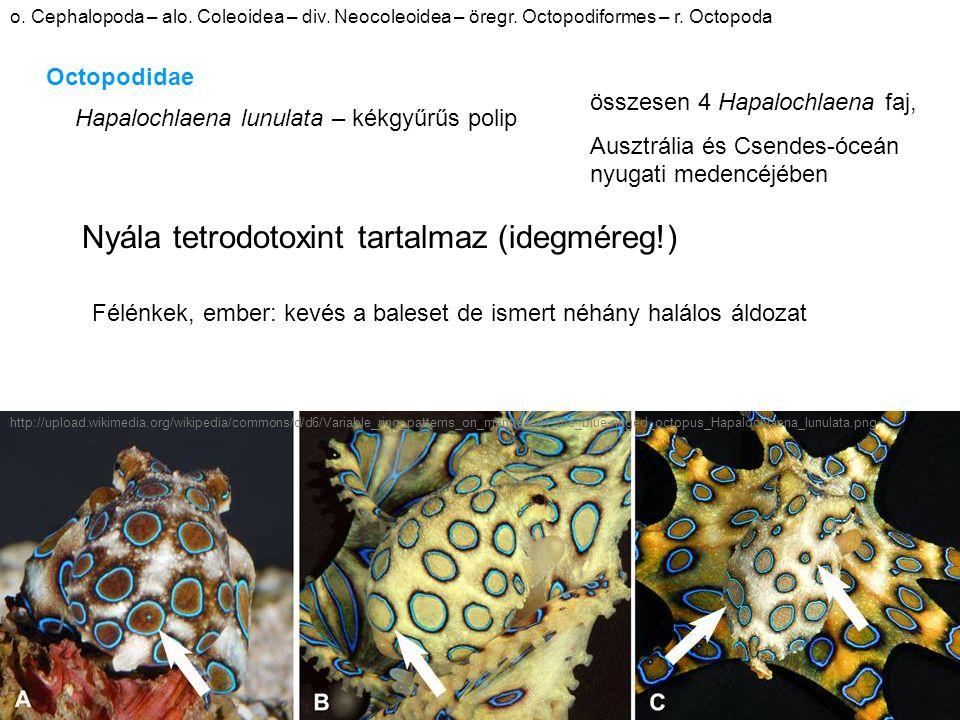 o. Cephalopoda – alo. Coleoidea – div. Neocoleoidea – öregr.