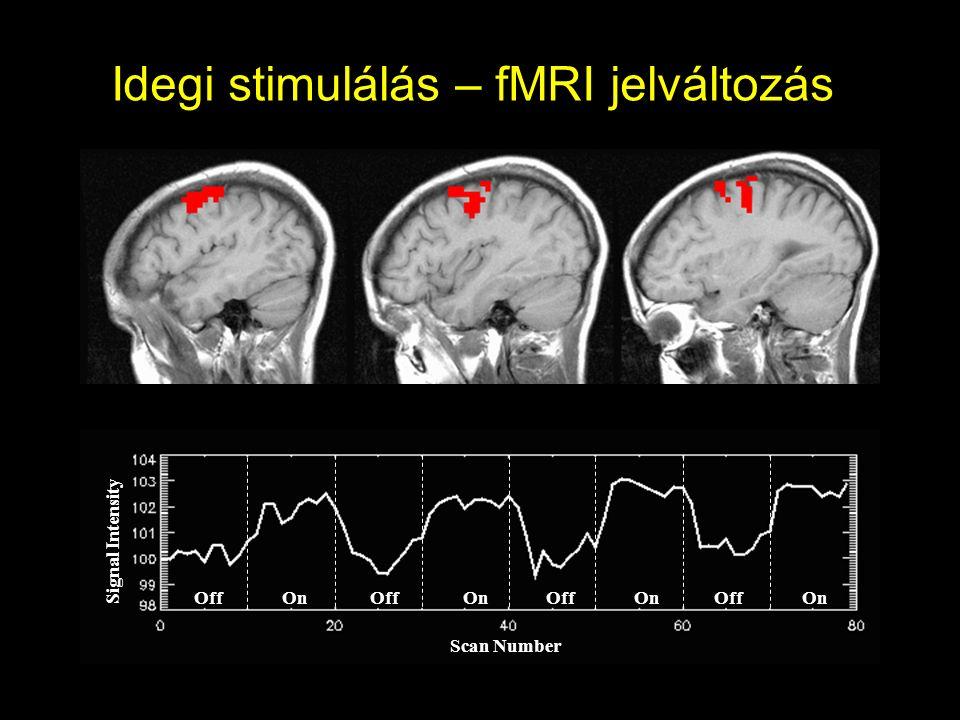 Idegi stimulálás – fMRI jelváltozás Off On Scan Number Signal Intensity