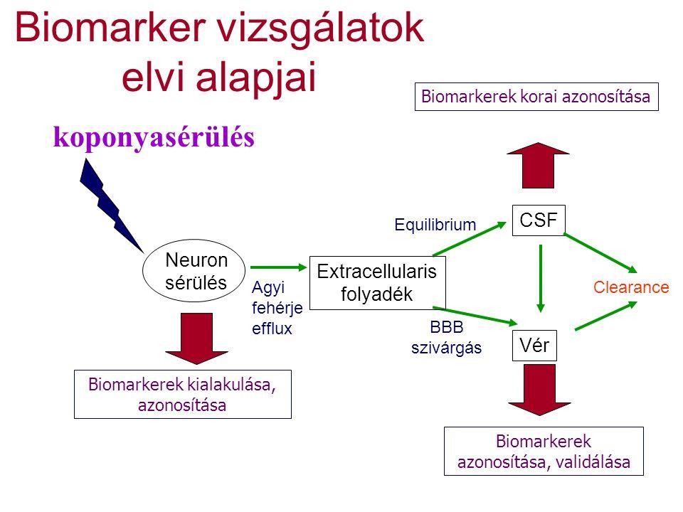 Biomarker vizsgálatok elvi alapjai Agyi fehérje efflux BBB szivárgás Clearance koponyasérülés Equilibrium Neuron sérülés Biomarkerek azonosítása, validálása Extracellularis folyadék Biomarkerek korai azonosítása Biomarkerek kialakulása, azonosítása CSF Vér
