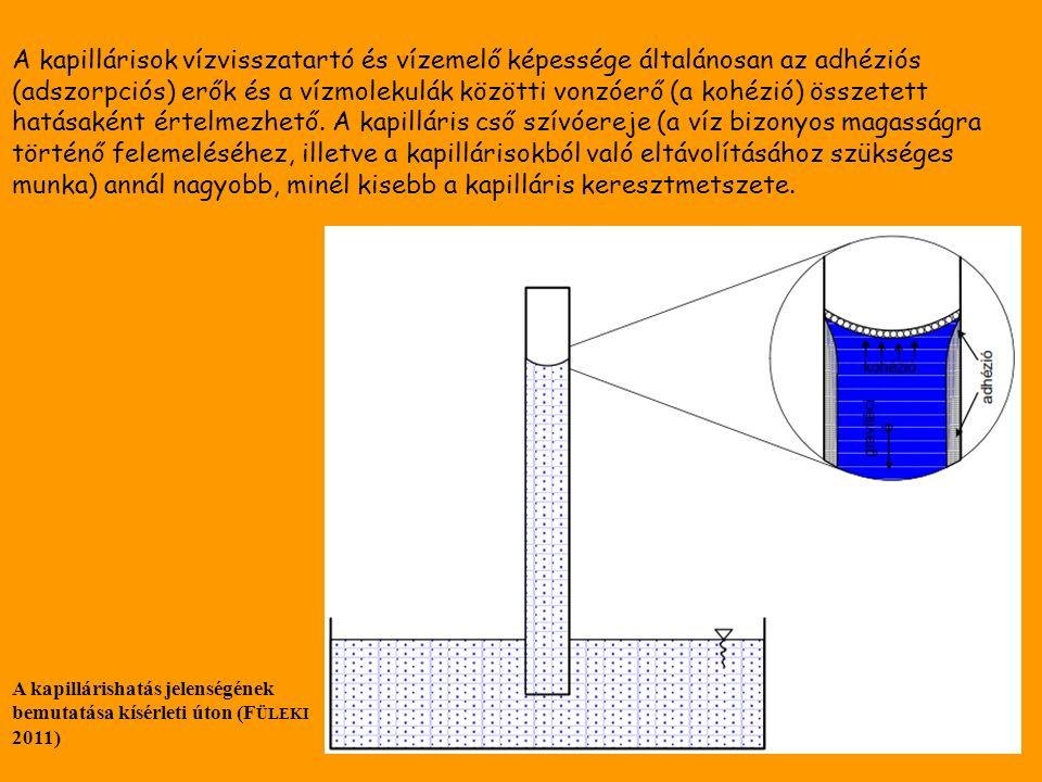 A kapillárisok vízvisszatartó és vízemelő képessége általánosan az adhéziós (adszorpciós) erők és a vízmolekulák közötti vonzóerő (a kohézió) összetett hatásaként értelmezhető.