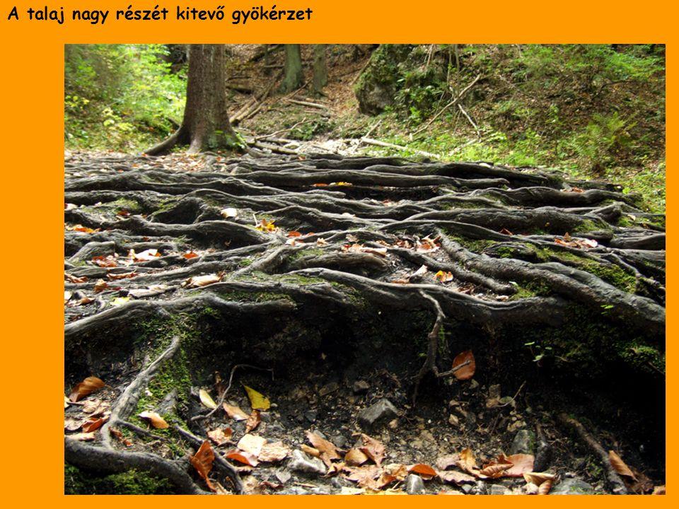 A talaj nagy részét kitevő gyökérzet