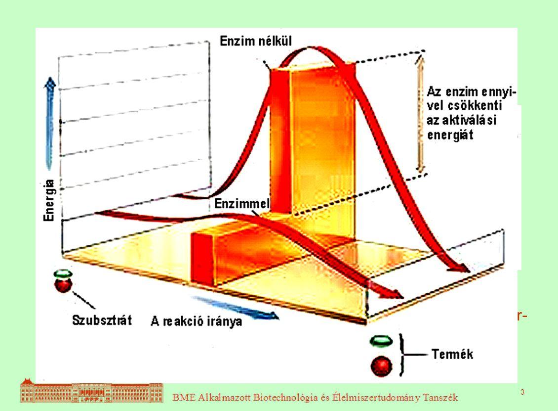ENZIMKINETIKA Enzimek = biokatalizátorok Katalizátor: az aktiválási energia csökkenté-sével meggyorsítja kémiai reak-ciót. Csak termodinamikailag lehe