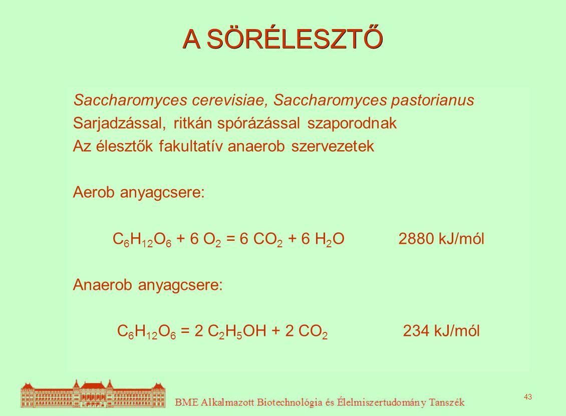 A SÖRÉLESZTŐ Saccharomyces cerevisiae, Saccharomyces pastorianus Sarjadzással, ritkán spórázással szaporodnak Az élesztők fakultatív anaerob szervezetek Aerob anyagcsere: C 6 H 12 O 6 + 6 O 2 = 6 CO 2 + 6 H 2 O 2880 kJ/mól Anaerob anyagcsere: C 6 H 12 O 6 = 2 C 2 H 5 OH + 2 CO 2 234 kJ/mól 43