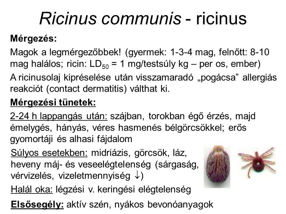 Ricinus communis - ricinus Mérgezés: Magok a legmérgezőbbek.
