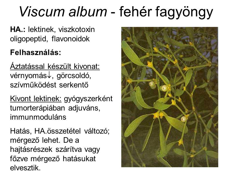 Viscum album - fehér fagyöngy HA.: lektinek, viszkotoxin oligopeptid, flavonoidok Felhasználás: Áztatással készült kivonat: vérnyomás , görcsoldó, szívműködést serkentő Kivont lektinek: gyógyszerként tumorterápiában adjuváns, immunmoduláns Hatás, HA.összetétel változó; mérgező lehet.