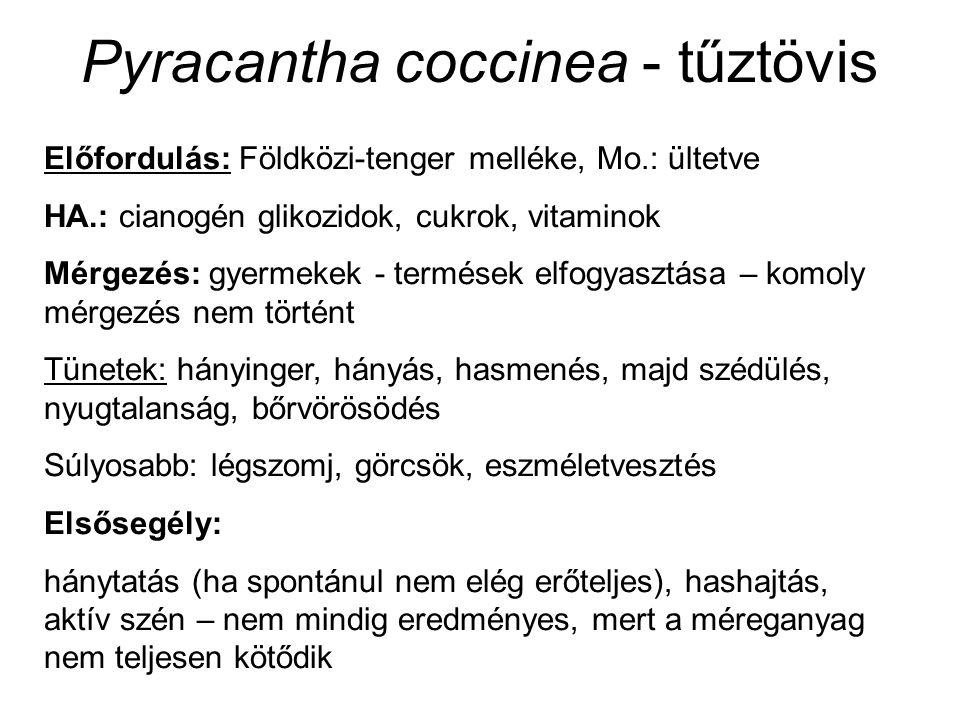 Pyracantha coccinea - tűztövis Előfordulás: Földközi-tenger melléke, Mo.: ültetve HA.: cianogén glikozidok, cukrok, vitaminok Mérgezés: gyermekek - termések elfogyasztása – komoly mérgezés nem történt Tünetek: hányinger, hányás, hasmenés, majd szédülés, nyugtalanság, bőrvörösödés Súlyosabb: légszomj, görcsök, eszméletvesztés Elsősegély: hánytatás (ha spontánul nem elég erőteljes), hashajtás, aktív szén – nem mindig eredményes, mert a méreganyag nem teljesen kötődik
