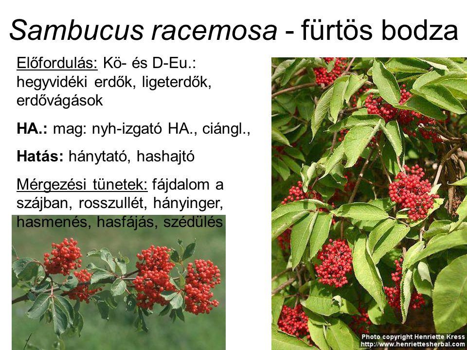 Sambucus racemosa - fürtös bodza Előfordulás: Kö- és D-Eu.: hegyvidéki erdők, ligeterdők, erdővágások HA.: mag: nyh-izgató HA., ciángl., Hatás: hánytató, hashajtó Mérgezési tünetek: fájdalom a szájban, rosszullét, hányinger, hasmenés, hasfájás, szédülés
