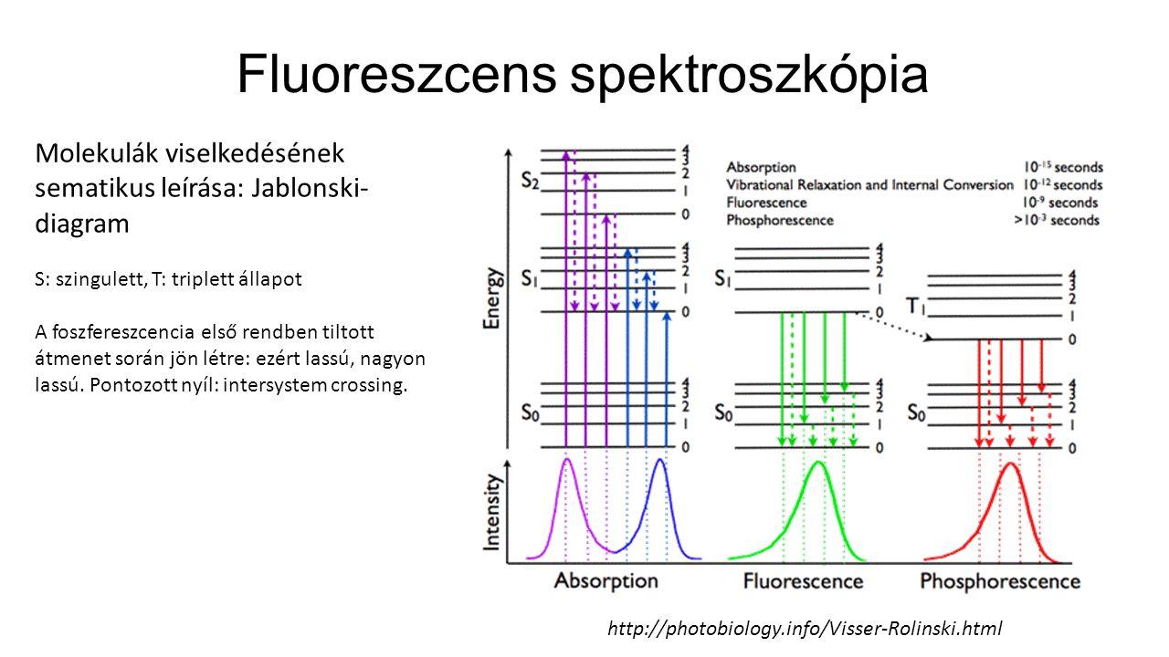 Fluoreszcens spektroszkópia Molekulák viselkedésének sematikus leírása: Jablonski- diagram S: szingulett, T: triplett állapot A foszfereszcencia első rendben tiltott átmenet során jön létre: ezért lassú, nagyon lassú.