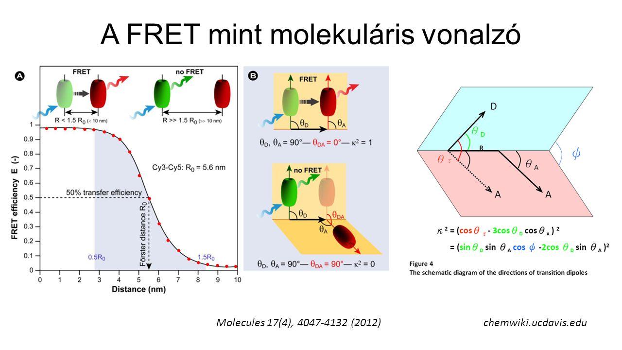 A FRET mint molekuláris vonalzó Molecules 17(4), 4047-4132 (2012)chemwiki.ucdavis.edu