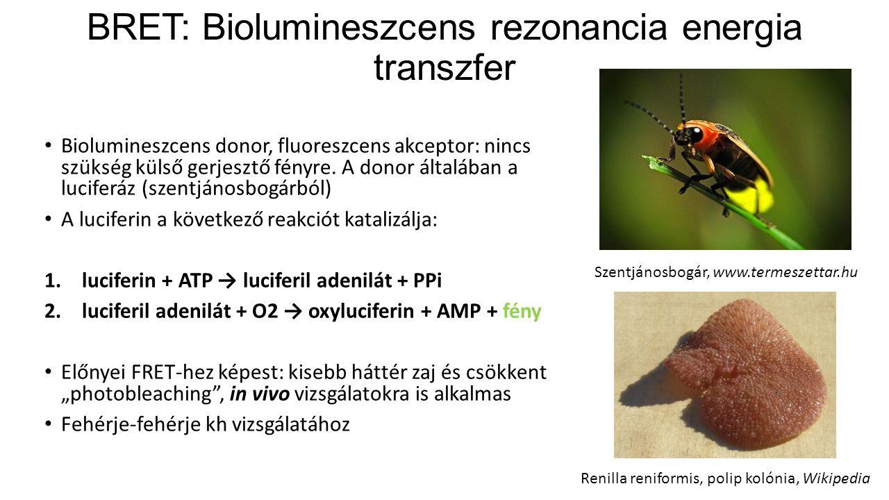 BRET: Biolumineszcens rezonancia energia transzfer Biolumineszcens donor, fluoreszcens akceptor: nincs szükség külső gerjesztő fényre.