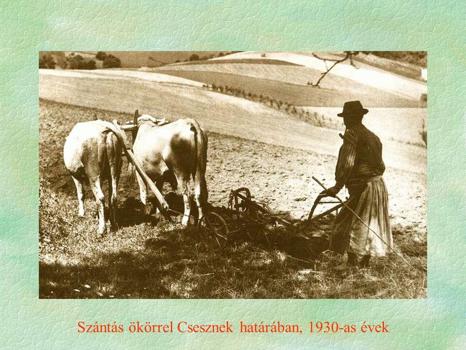 Szántás ökörrel Csesznek határában, 1930-as évek