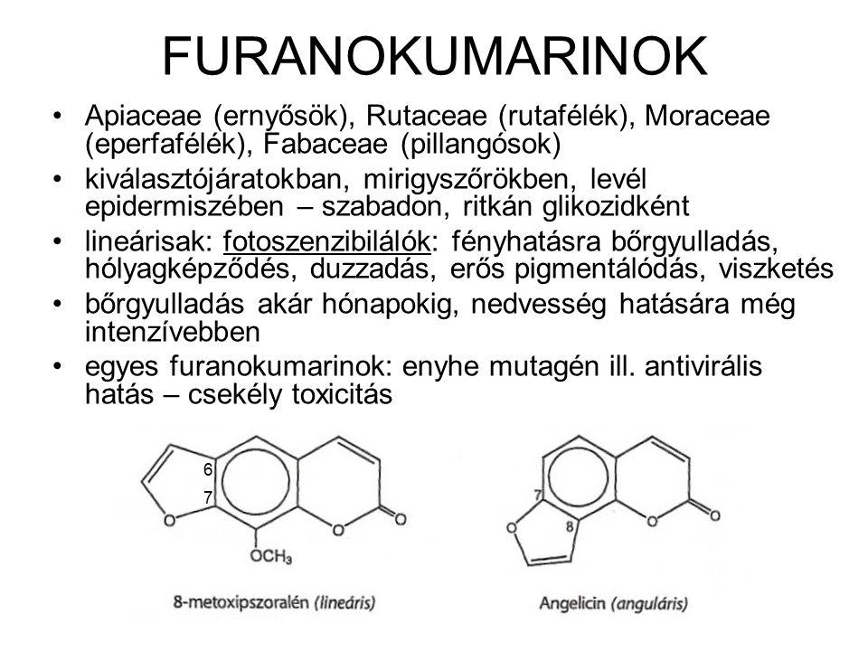 FURANOKUMARINOK Apiaceae (ernyősök), Rutaceae (rutafélék), Moraceae (eperfafélék), Fabaceae (pillangósok) kiválasztójáratokban, mirigyszőrökben, levél epidermiszében – szabadon, ritkán glikozidként lineárisak: fotoszenzibilálók: fényhatásra bőrgyulladás, hólyagképződés, duzzadás, erős pigmentálódás, viszketés bőrgyulladás akár hónapokig, nedvesség hatására még intenzívebben egyes furanokumarinok: enyhe mutagén ill.