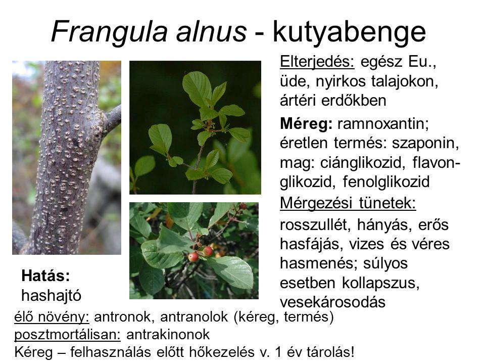 Elterjedés: egész Eu., üde, nyirkos talajokon, ártéri erdőkben Méreg: ramnoxantin; éretlen termés: szaponin, mag: ciánglikozid, flavon- glikozid, fenolglikozid Mérgezési tünetek: rosszullét, hányás, erős hasfájás, vizes és véres hasmenés; súlyos esetben kollapszus, vesekárosodás élő növény: antronok, antranolok (kéreg, termés) posztmortálisan: antrakinonok Kéreg – felhasználás előtt hőkezelés v.