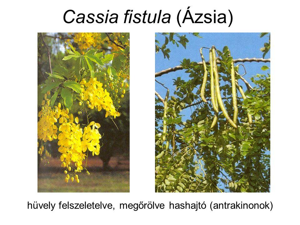 Cassia fistula (Ázsia) hüvely felszeletelve, megőrölve hashajtó (antrakinonok)
