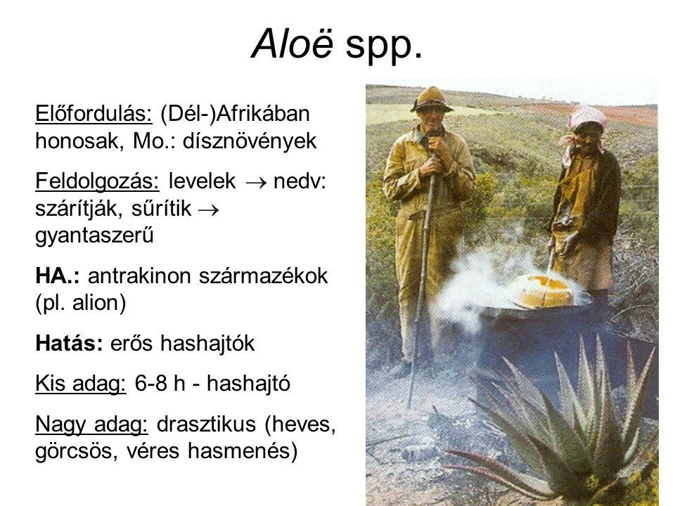 Aloë spp.