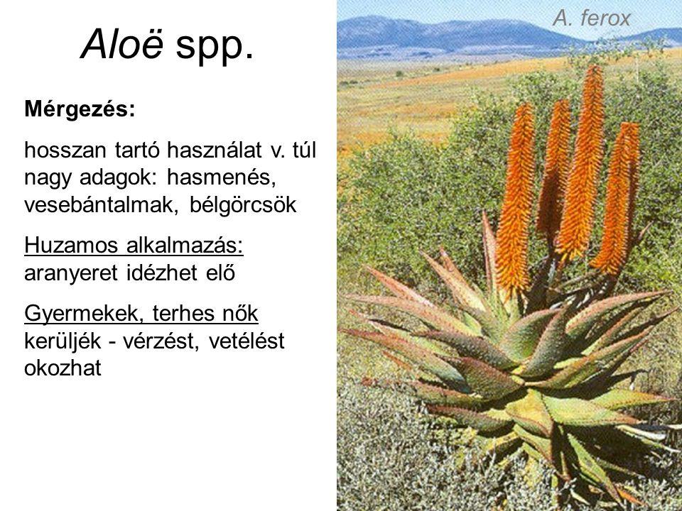 Aloë spp. Mérgezés: hosszan tartó használat v.