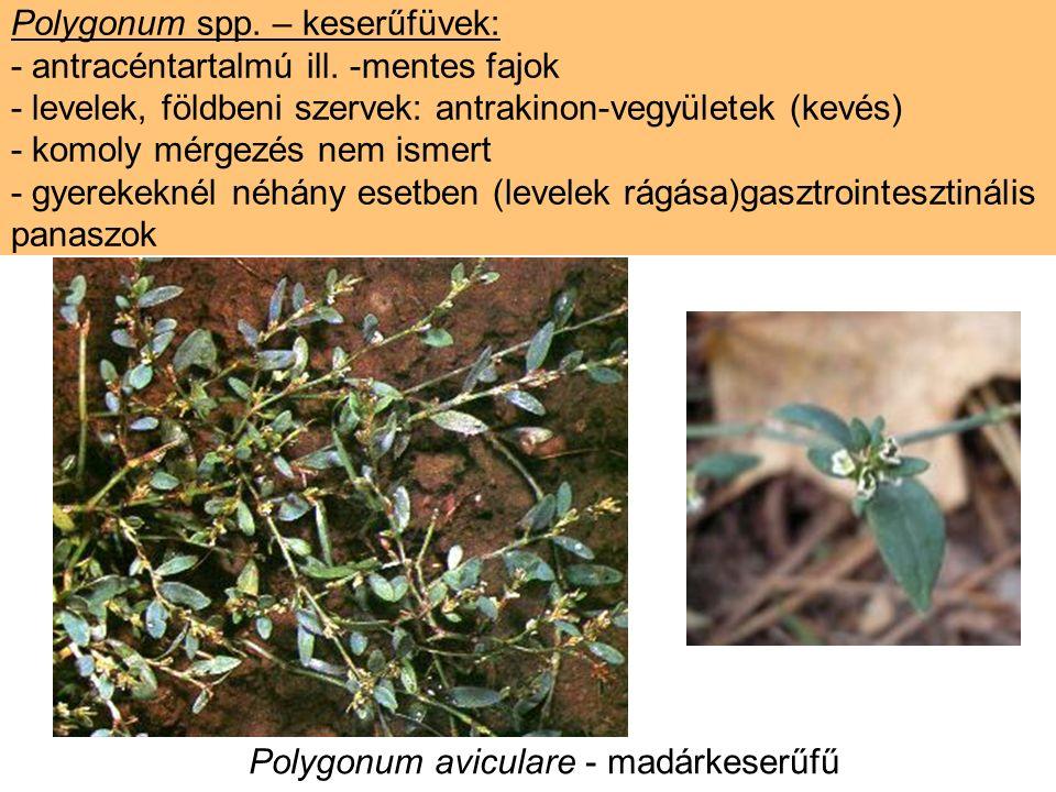 Polygonum spp. – keserűfüvek: - antracéntartalmú ill.