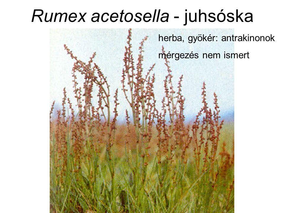 Rumex acetosella - juhsóska herba, gyökér: antrakinonok mérgezés nem ismert