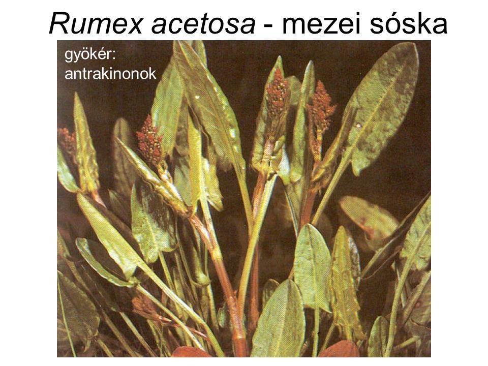 Rumex acetosa - mezei sóska gyökér: antrakinonok