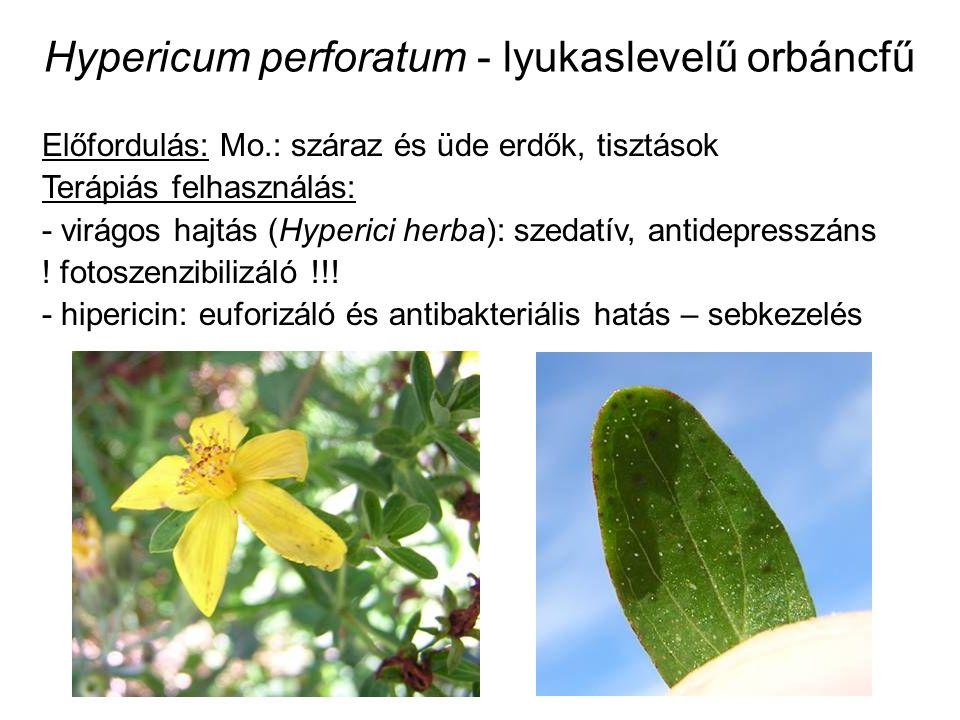 Hypericum perforatum - lyukaslevelű orbáncfű Előfordulás: Mo.: száraz és üde erdők, tisztások Terápiás felhasználás: - virágos hajtás (Hyperici herba): szedatív, antidepresszáns .