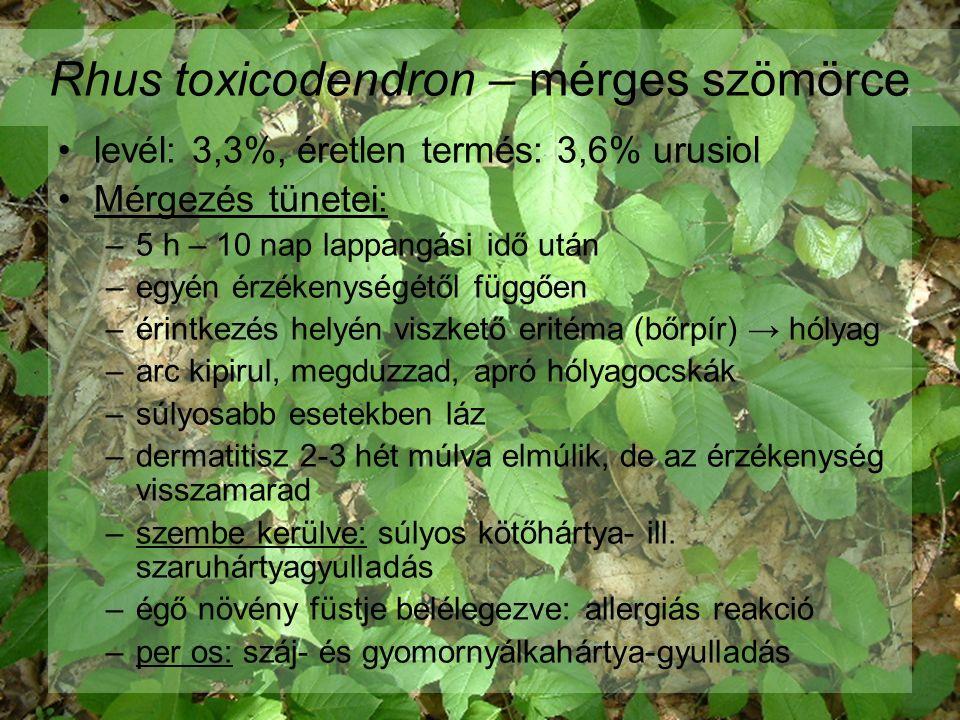 Rhus toxicodendron – mérges szömörce levél: 3,3%, éretlen termés: 3,6% urusiol Mérgezés tünetei: –5 h – 10 nap lappangási idő után –egyén érzékenységétől függően –érintkezés helyén viszkető eritéma (bőrpír) → hólyag –arc kipirul, megduzzad, apró hólyagocskák –súlyosabb esetekben láz –dermatitisz 2-3 hét múlva elmúlik, de az érzékenység visszamarad –szembe kerülve: súlyos kötőhártya- ill.