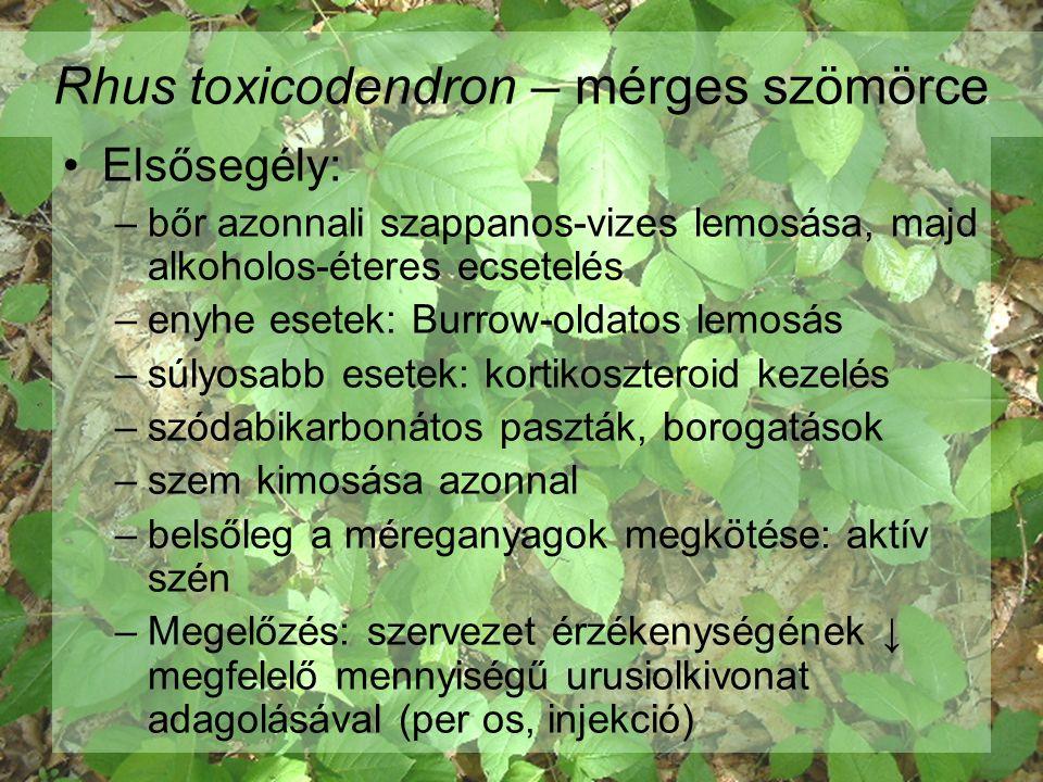 Tamarindus indica - tamarind termés  hashajtó hatású lekvár, püré