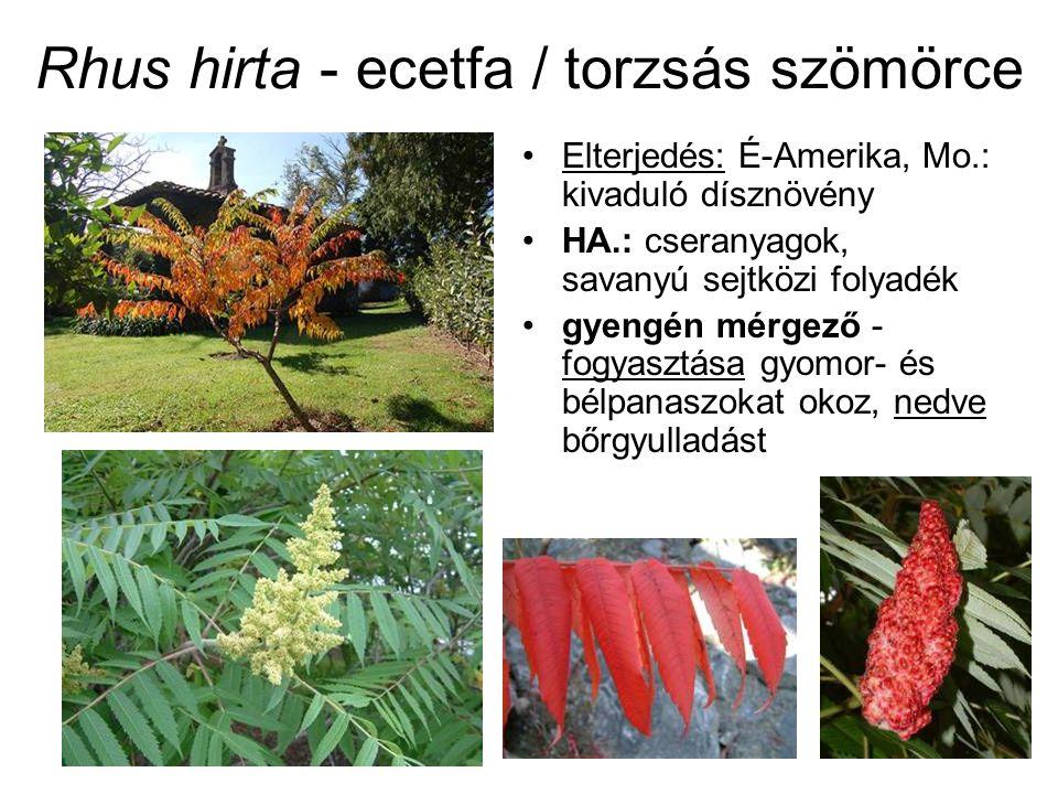 BENZOKINON-SZÁRMAZÉKOK Primula spp.: primin – száron, levelek fonákán: mirigyszőrök –szublimációra hajlamos – légzőrendszer nyh.