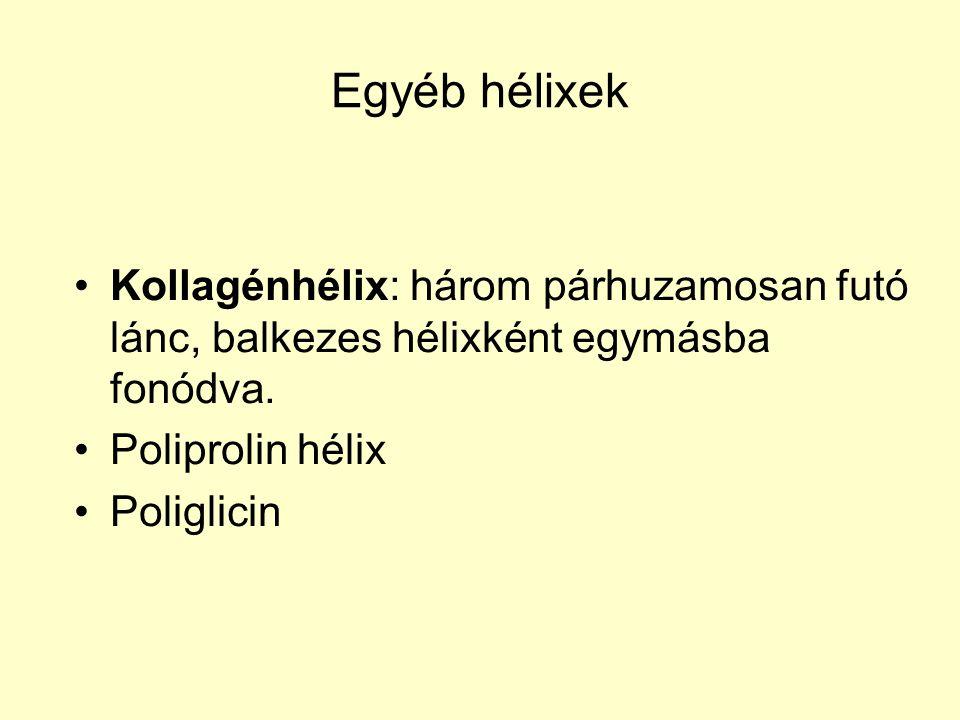 Egyéb hélixek Kollagénhélix: három párhuzamosan futó lánc, balkezes hélixként egymásba fonódva.