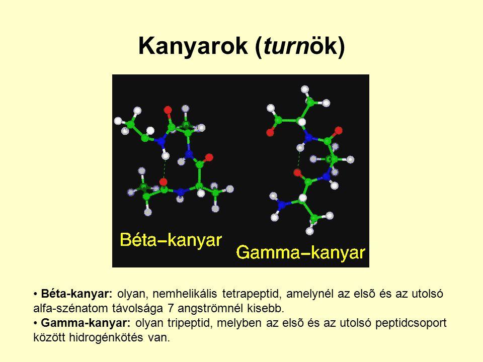 Kanyarok (turnök) Béta-kanyar: olyan, nemhelikális tetrapeptid, amelynél az elsõ és az utolsó alfa-szénatom távolsága 7 angströmnél kisebb.
