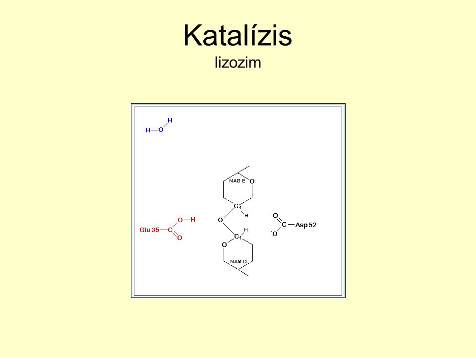 Katalízis lizozim