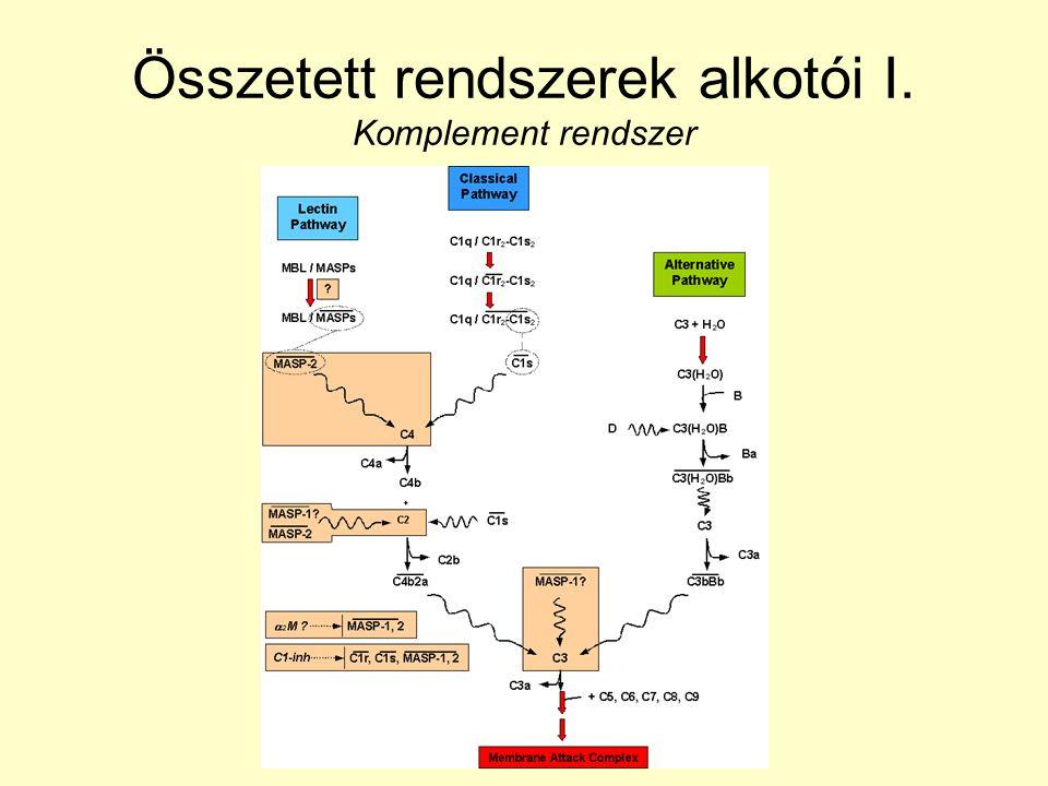 Összetett rendszerek alkotói I. Komplement rendszer