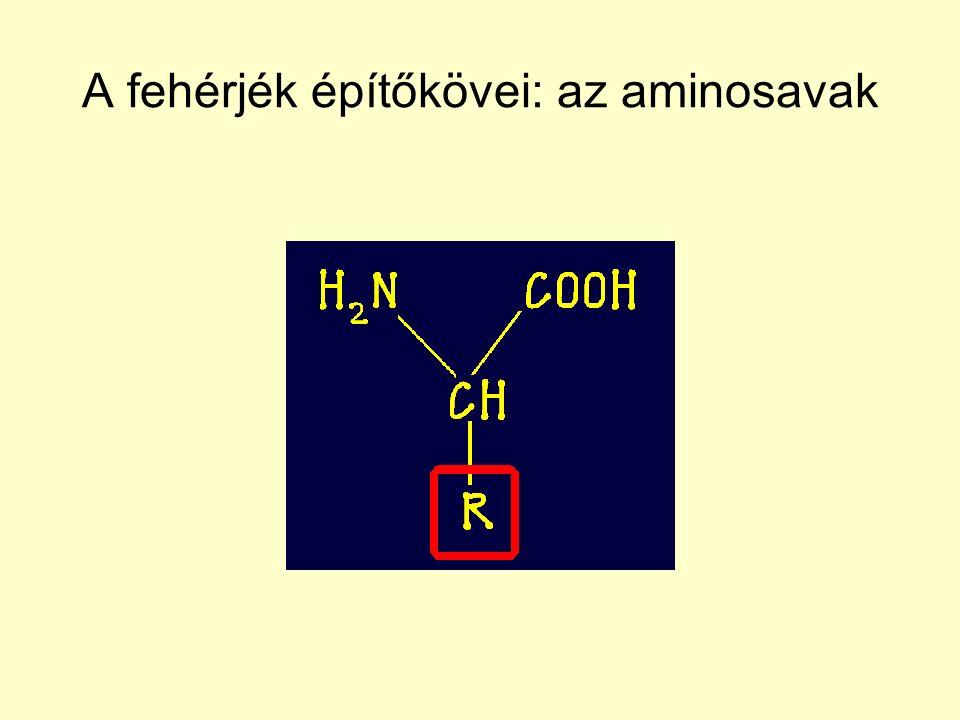 A fehérjék építőkövei: az aminosavak