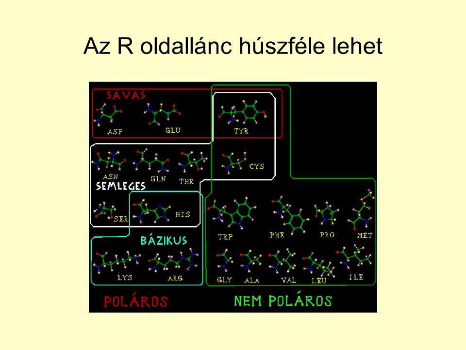 Másodlagos szerkezeti elemek Másodlagos szerkezet: a lánc gerincének rövid távú szerkezete A polipeptidláncot szakaszokra bonthatjuk: –Jellegzetes konformációk periodikus konformációk (homokonformációk; ugyanaz a (fi,pszi) pár ismétlődik).