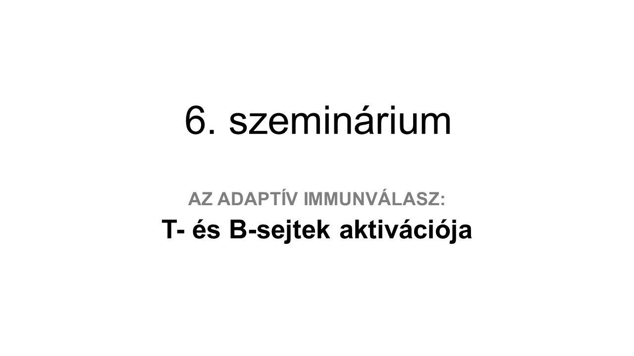 6. szeminárium AZ ADAPTÍV IMMUNVÁLASZ: T- és B-sejtek aktivációja