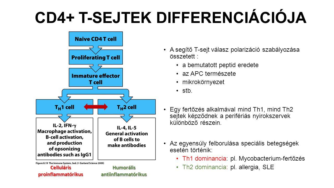 CD4+ T-SEJTEK DIFFERENCIÁCIÓJA A segítő T-sejt válasz polarizáció szabályozása összetett : a bemutatott peptid eredete az APC természete mikrokörnyeze