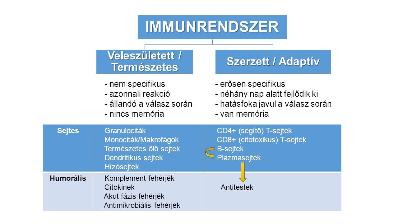 - nem specifikus - azonnali reakció - állandó a válasz során - nincs memória - erősen specifikus - néhány nap alatt fejlődik ki - hatásfoka javul a válasz során - van memóriaIMMUNRENDSZER Veleszületett / Természetes Szerzett / Adaptív Sejtes Granulociták Monociták/Makrofágok Természetes ölő sejtek Dendritikus sejtek Hízósejtek CD4+ (segítő) T-sejtek CD8+ (citotoxikus) T-sejtek B-sejtek Plazmasejtek Humorális Komplement fehérjék Citokinek Akut fázis fehérjék Antimikrobiális fehérjék Antitestek